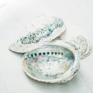 Decoratie schelp Abalone XL |